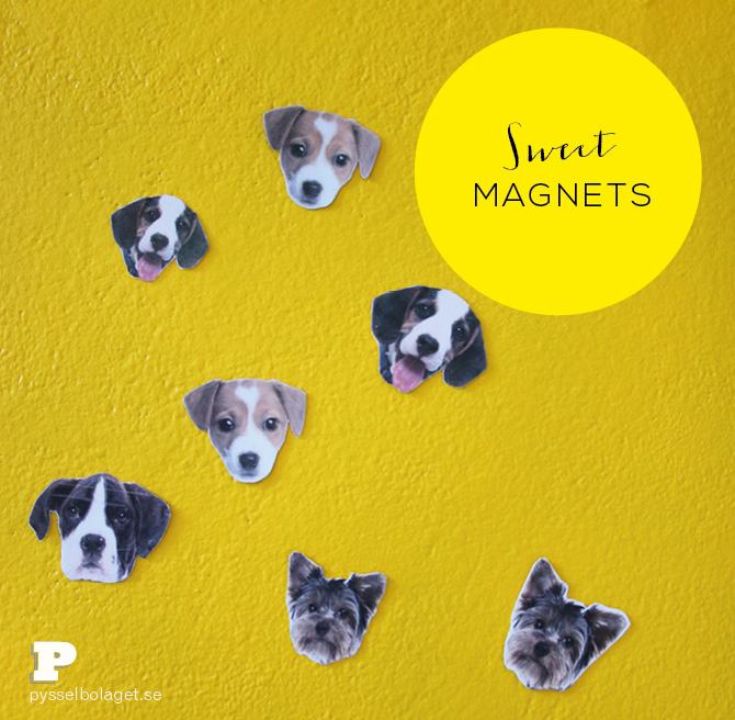 Sweet magnets PB 2014 1
