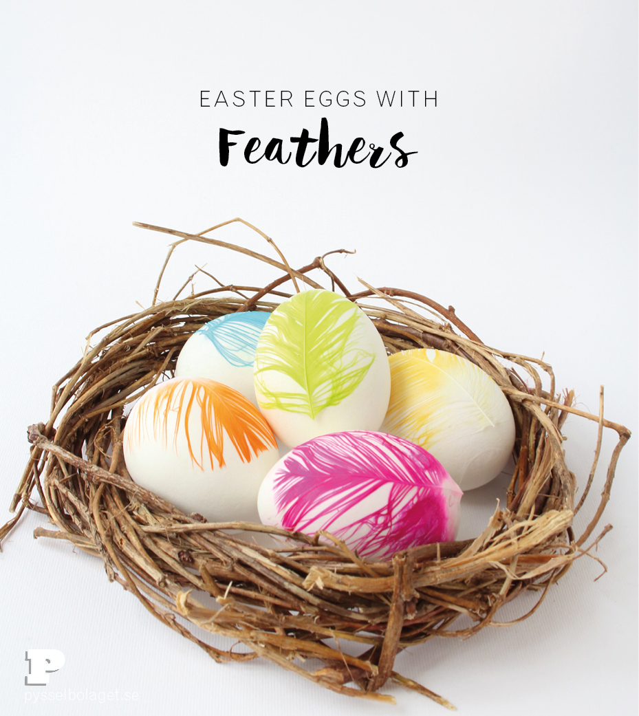 Egg and Feathers