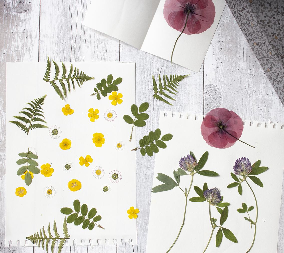 Pressade blommor | Pysselbolaget